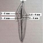 Топография полостей зубов
