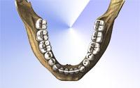 Нижняя зубная дуга