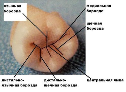 http://disamed.net/images/stories/anatomi/a49.jpg