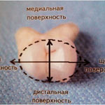 Овальная