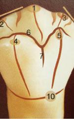 Жевательная и язычная поверхности